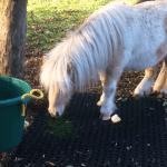 Rubber Grass Mats Amate Animalia - Featured Image