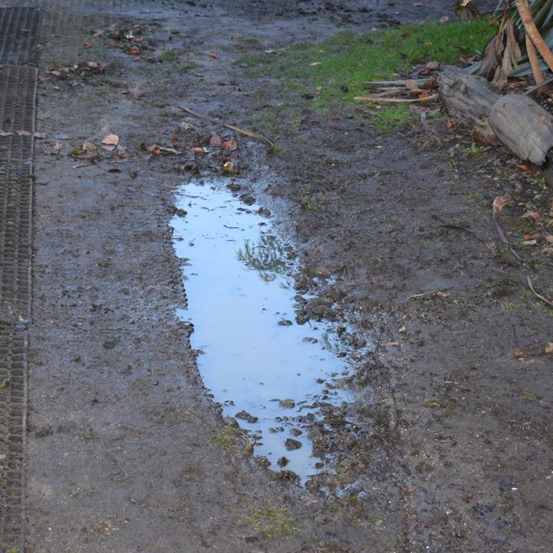 Rubber Grass Mats Under The Living Rainforest's Play Area - Before
