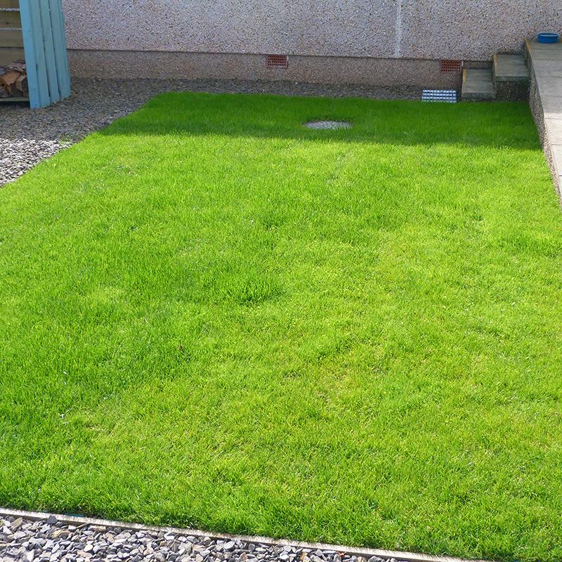 Green X-Grid Grass Driveway - Finished