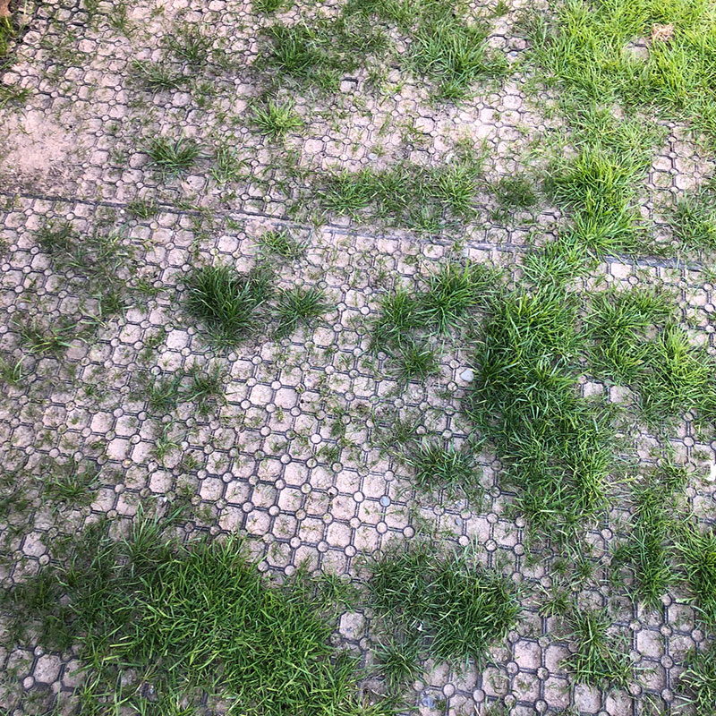 Rubber Grass Mats Installed on a Back Garden - Mats Installed & Grass Growing
