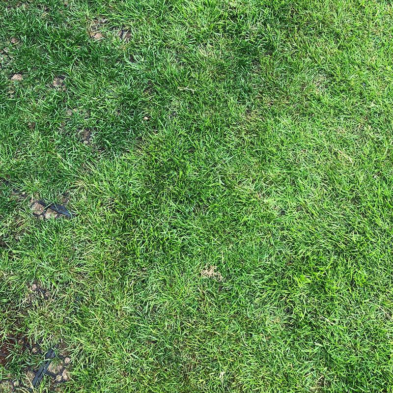 Rubber Grass Mats Installed on a Back Garden - Mats Installed & Grass Grown