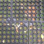 Everything About Rubber Grass Mats - Featured Image