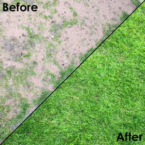 Grass-Protection-Mats---Installed-On-Back-Garden