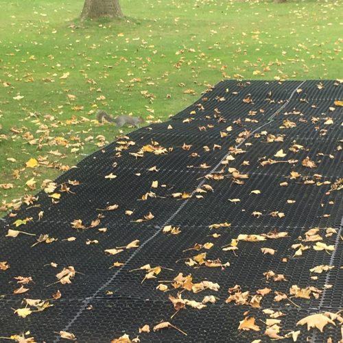 Squirrell On Rubber Grass Mats - Illuminate The Gardens