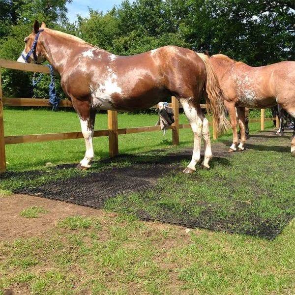 Rubber Grass Mats In Horse Paddock