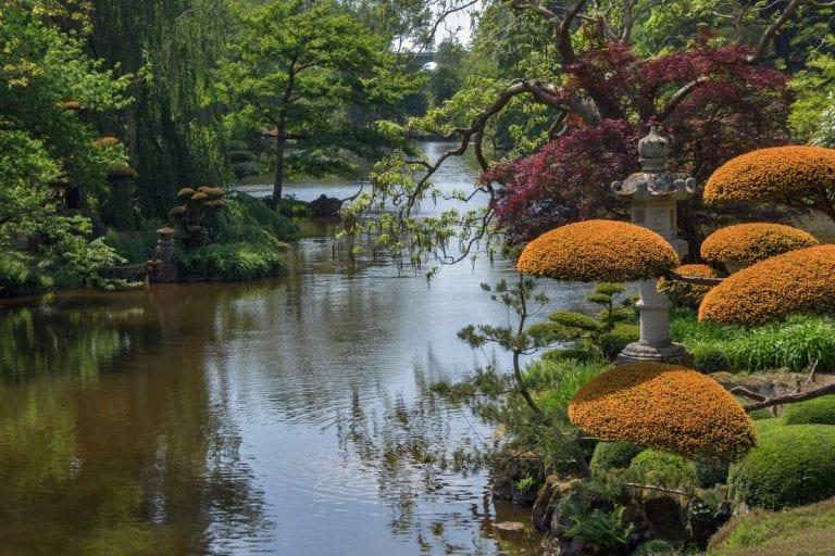 Japanese Garden - Plants