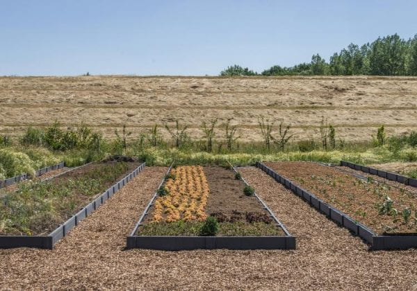 Rows of vegetables growing in a raised garden bed